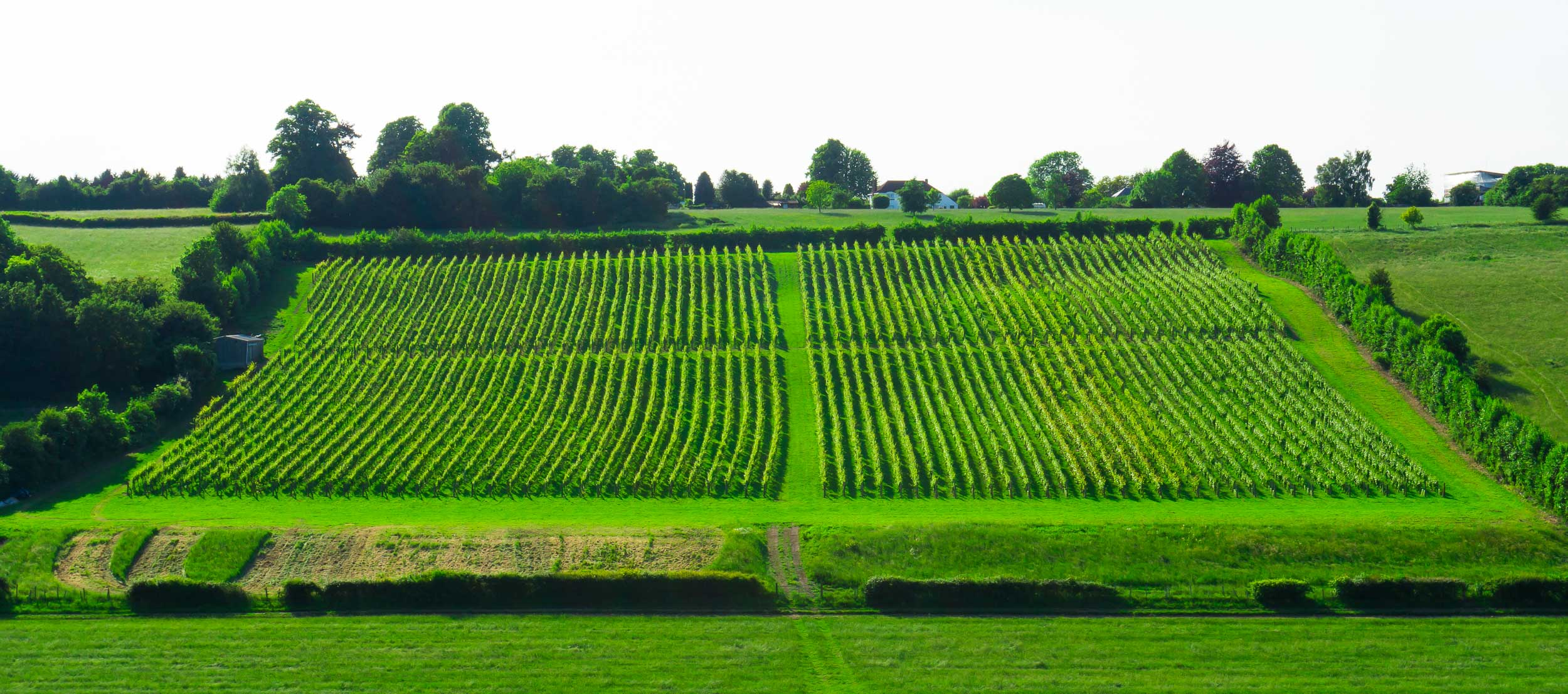 Meopham-Valley-Vineyard-Kent-English-Wine-Tour-1