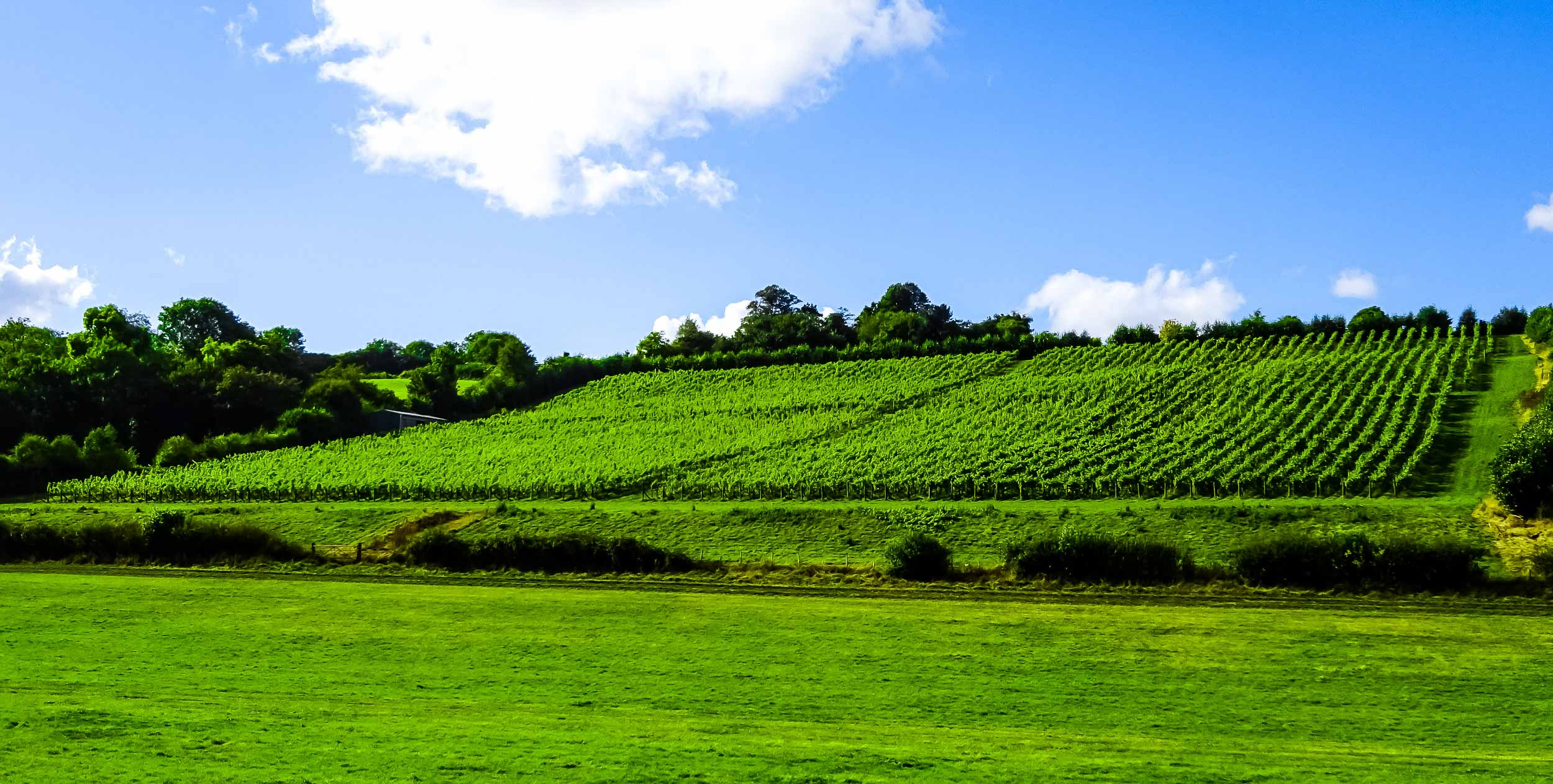 Meopham-Valley-Vineyard-Kent-English-Wine-Tour-2