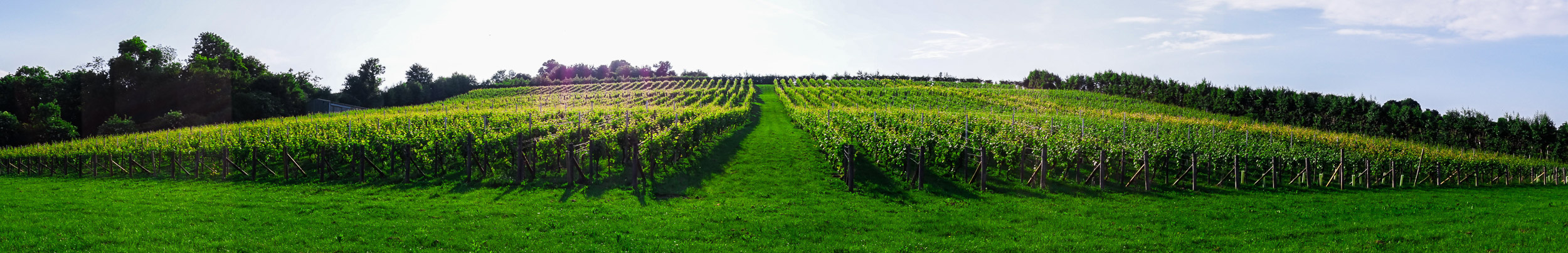 Meopham-Valley-Vineyard-Kent-English-Wine-Tour-3